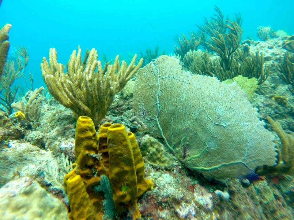 coral reef in antigua and barbuda, diving