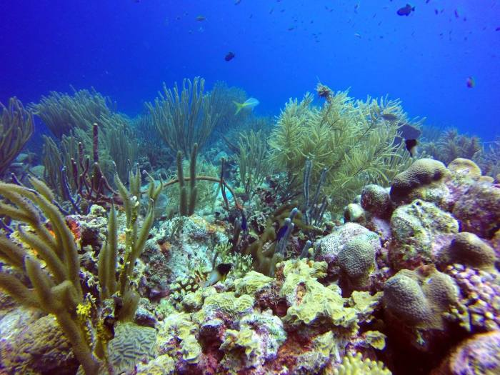 diving in bonaire, coral reef